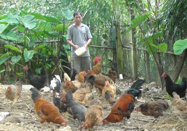 """Nông sản Việt """"rộng cửa"""" ra thế giới với hội nhập TPP - hinh 2"""