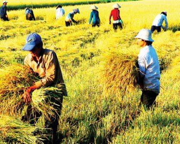 """Nông sản Việt """"rộng cửa"""" ra thế giới với hội nhập TPP"""